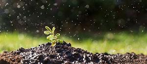 gartenbepflanzung_nitzsche.jpg