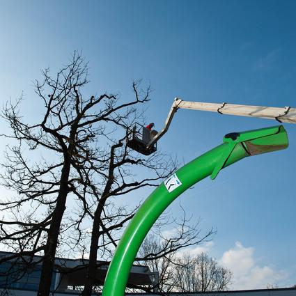 Baumbeschnitt