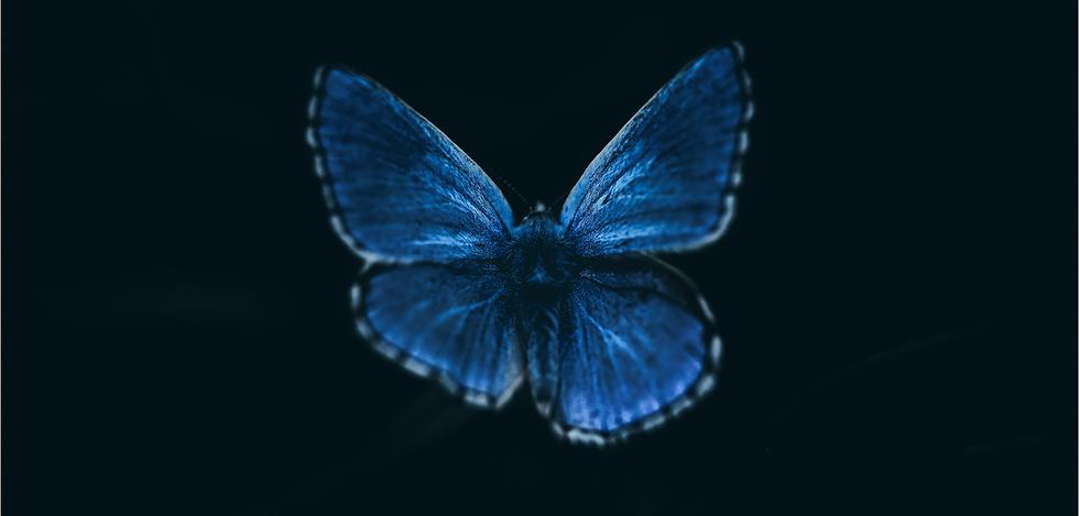 Argus bleu V