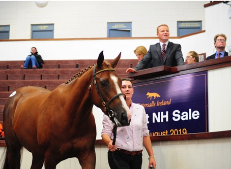 Jet Away Tops Day Three At August NH Sale