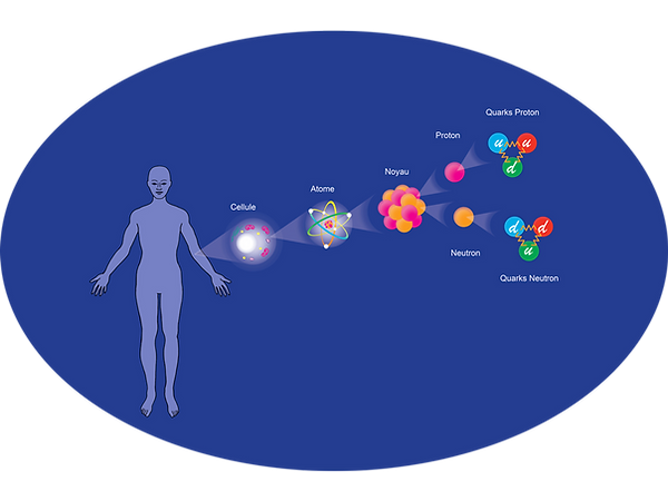 Quarks-repro-cellulaire.png
