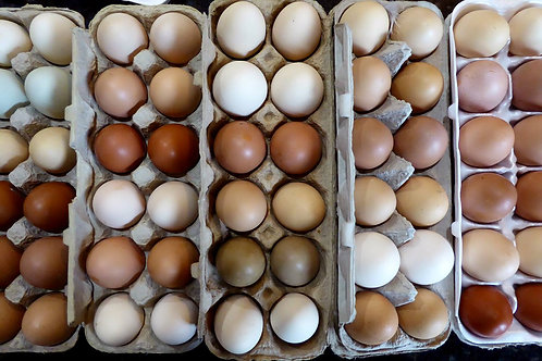 Farm Free Eggs- pick up only