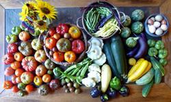 Harvest week of  8-14-16