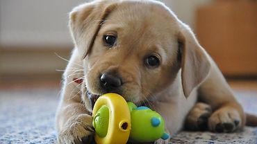 Terapeuta de cães adestramento positivo de cachorros rj belém passo fundo