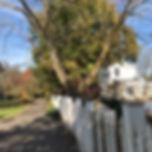 Before Tree.jpg