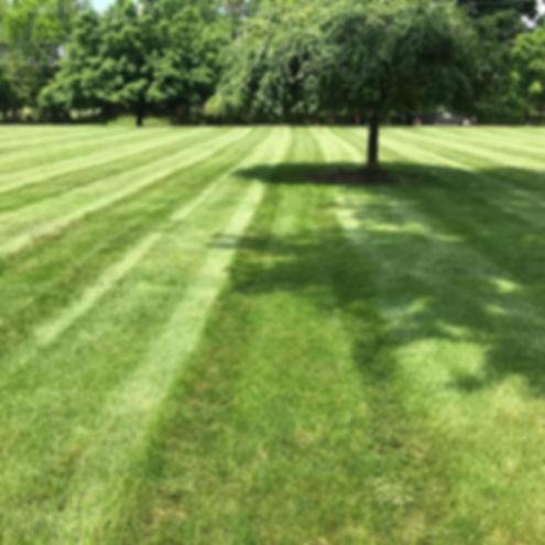 lawn maintenance 3.jpg