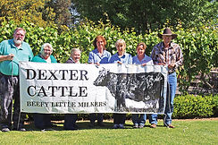 Dexter Cattle Promotion Group RIVERINA - NSW