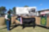 Dexter Cattle QLD Breedshow Supreme champion Bull - Bircham Langle