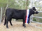 Dexter - Andean Champion 2014