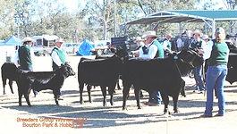 Dexter Cattle Breed Show Queensland 2014