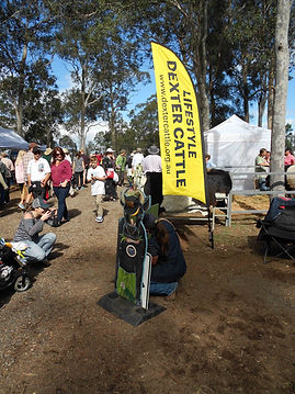 DEXTER CATTLE EXHIBIT - TOCAL FIELD DAYS