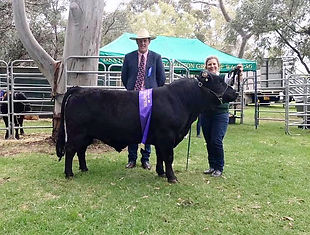 DEXTER CATTLE BREED SHOW WA 2018 - GRAND CHAMPION DEXTER BULL - BILLABONG MAGNUM