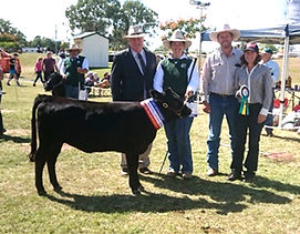 QLD BS 2018 - Champion DEXTER Calf-1.jpg