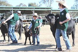 Dexter Cattle Breed Show 2014