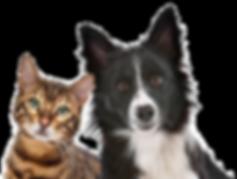 Ilustração cachorro e gato