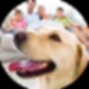cachorro-dentro-casa-familia.png