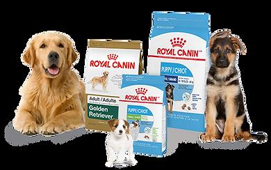 Icone Royal Canin