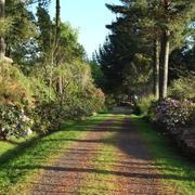 Path_through_Waitakaruru_Arboretum_and_Sculpture_Park_edited.jpg