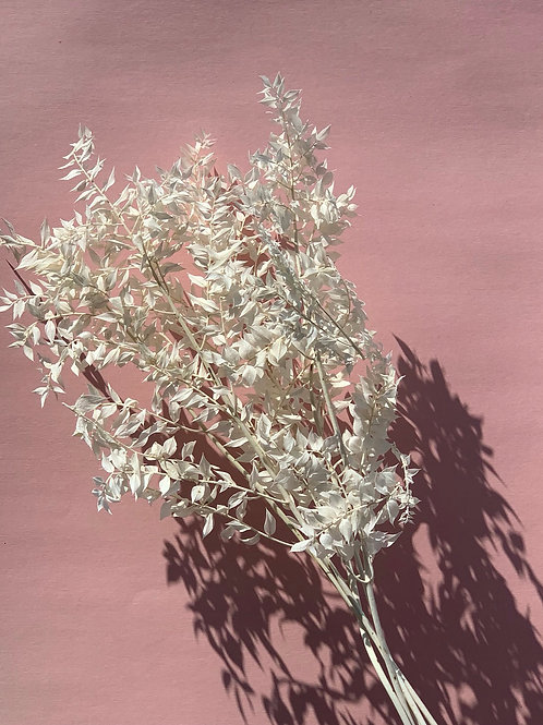 Ruscus - Dried - Bleached