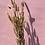 Thumbnail: Bunny tail