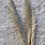 Thumbnail: Pampas Grass