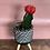 Thumbnail: Cactus Moon in an upgraded pot
