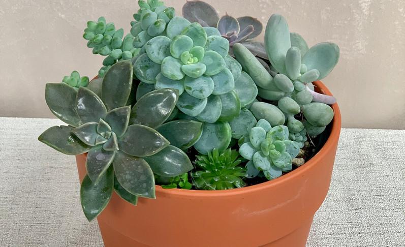 Succulent Planter - $25.00
