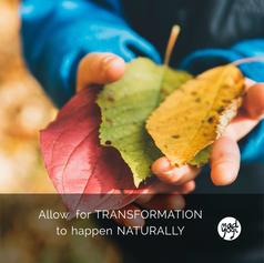 11 MadYogi Posters (transformation DVY 4