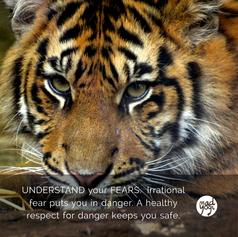 21 MadYogi Posters (fear).png