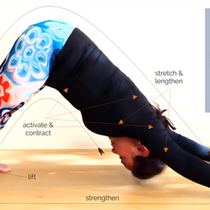 The Good {Downward Facing} Dog