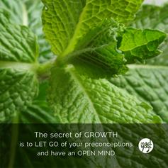 12 MadYogi Posters (growth DVY 1.2).png