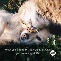 45 MadYogi Posters (patience & trust DVY