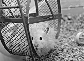Hamster%20Wheel_edited.jpg
