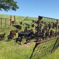 goats pen.jpg