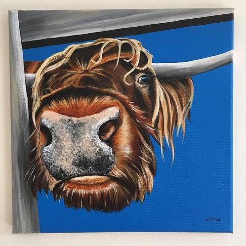 'Nosy Cow'