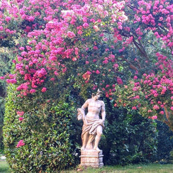 Statue e Begonie