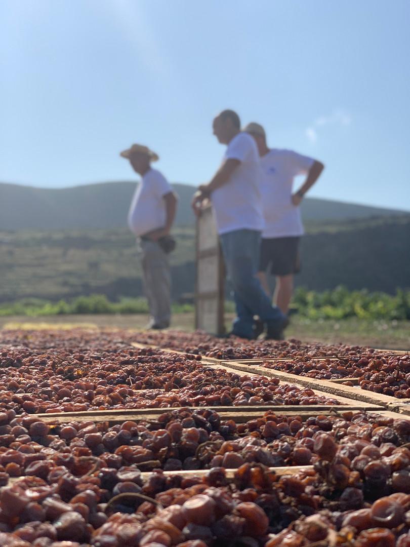 Workers in Pantelleria