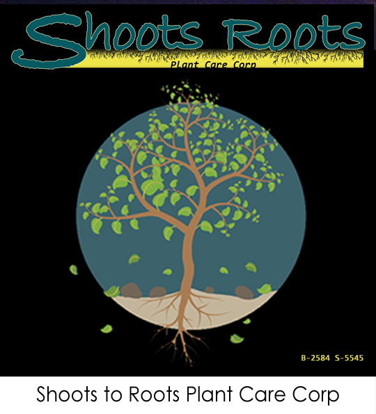 Shoots to Roots Plant Care