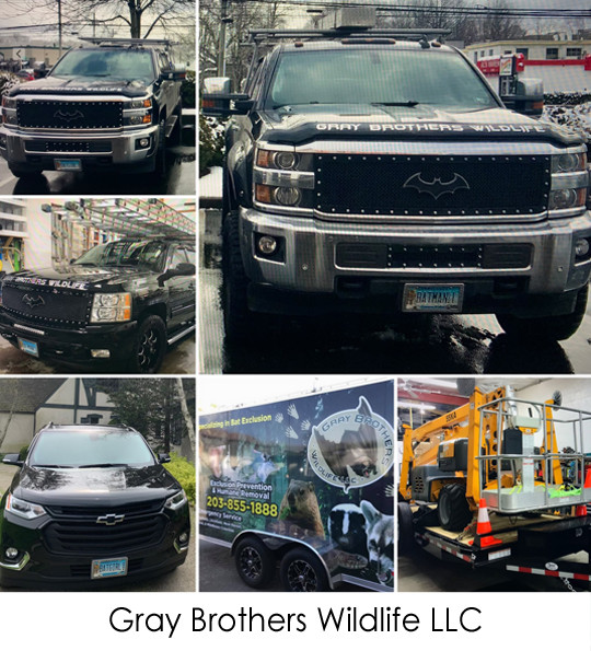 Gray Brothers Wildlife LLC