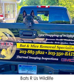 Bats R Us Wildlife Removal
