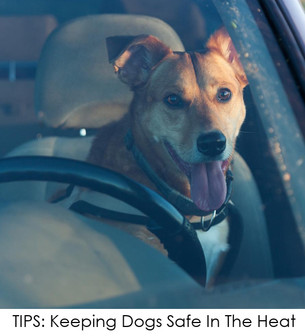 WHAT SHOULD YOU DO WHEN YOU SEE A PET IN A HOT CAR?  WE HAVE TIPS FROM AN EXPERT