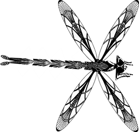 B&W Dragon Fly.png