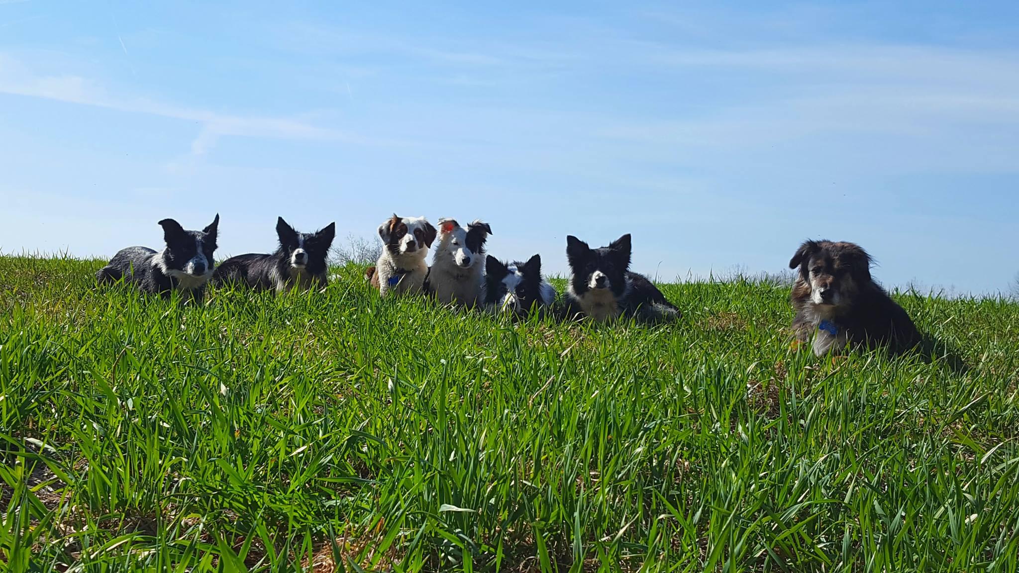 good dogs listening