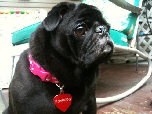 Wanda Petunia's Pet Grief Gathering