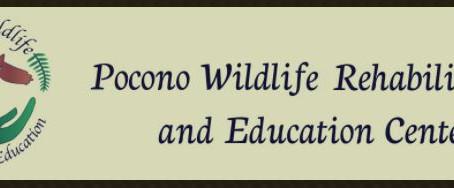 Pocono Wildlife Rehabilitation and Education Center Service Work