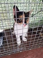 TNR'd Cat