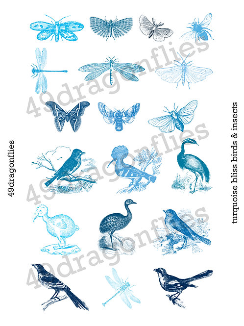 Turquoise Bliss Birds & Insects Clip Art