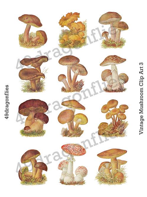Vintage Mushroom Clip Art 3
