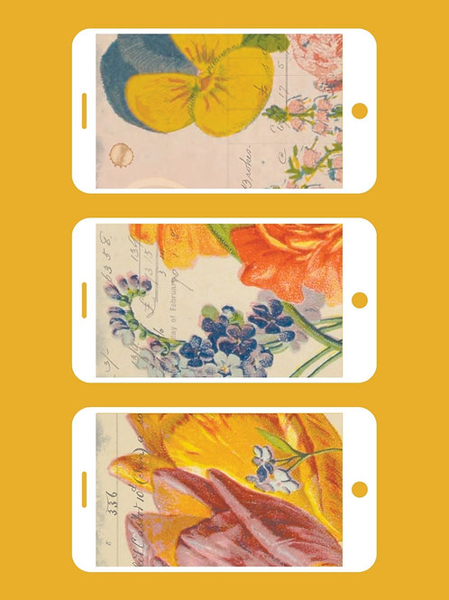 3 Phone Wallpapers, Lovely Summer Florals Set 2