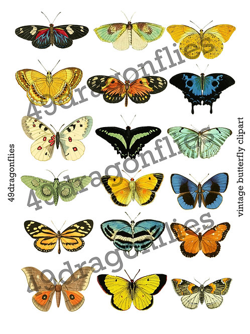 Vintage Butterfly Clipart